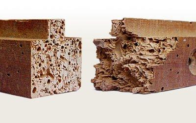 Carcoma o Polilla de la madera: Qué es y su tratamiento en nuestros muebles