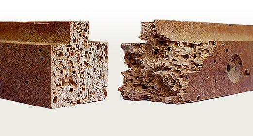 Carcoma o polilla de la madera qu es y su tratamiento en - Tratamiento carcoma muebles ...